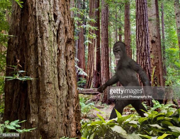 Bigfoot walking in forest