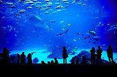 People looking at fishes in biggest aquarium in the world. Atlanta, Georgia.