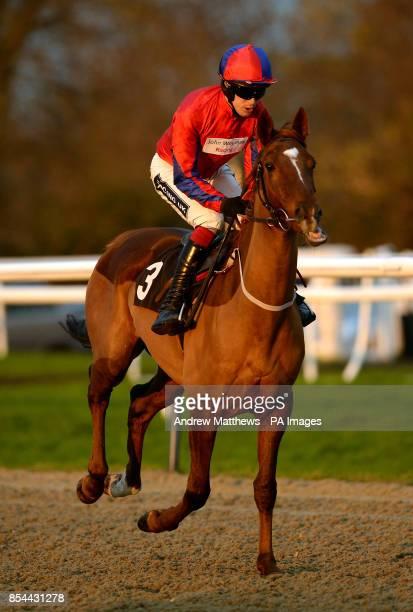 Bigindie ridden by jockey Aidan Coleman goes to post in the Greyhound Pub Lingfield 'Junior' Standard Open NH Flat Race