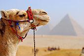 BIJ_2875a: Pyramids & camel