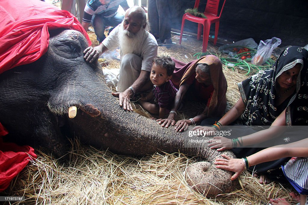 Bijlee, the 58-year-old ailing elephant rescued by individuals and NGOs sometime back, died today at Mulund on June 30, 2013 in Mumbai, India. Bijlee had collapsed under her own weight on June 11 in suburban Mulund. Weighing 5000 kilograms, she suffered from degenerative joint disease brought on by her obesity. Bijlee belonged to a couple who used it to beg for alms at marriages and other auspicious occasions and was allegedly abandoned by them.