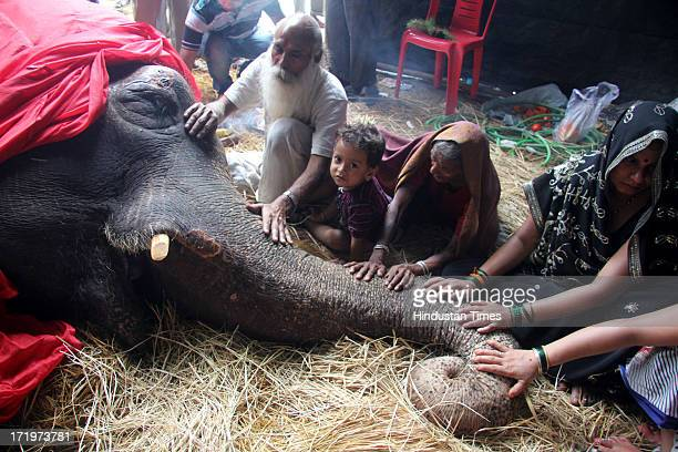 Bijlee the 58yearold ailing elephant rescued by individuals and NGOs sometime back died today at Mulund on June 30 2013 in Mumbai India Bijlee had...