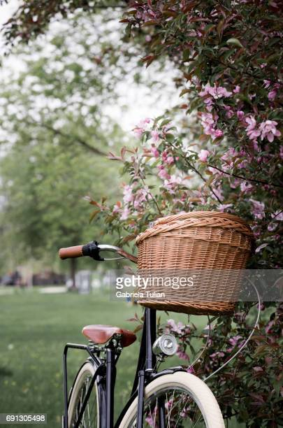 Bike in spring with the cherry blossom in a park.