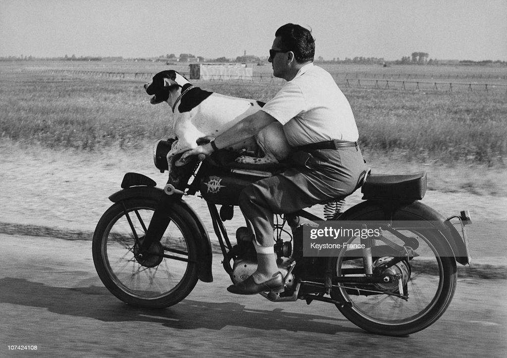 Biker With His Dog On The Bike In Milan On July 1957