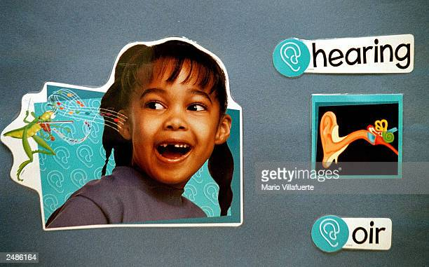 A bilingual poster on the wall of a first grade classroom translates the Spanish word 'oir' into 'hearing' with examples of an ear and a child...