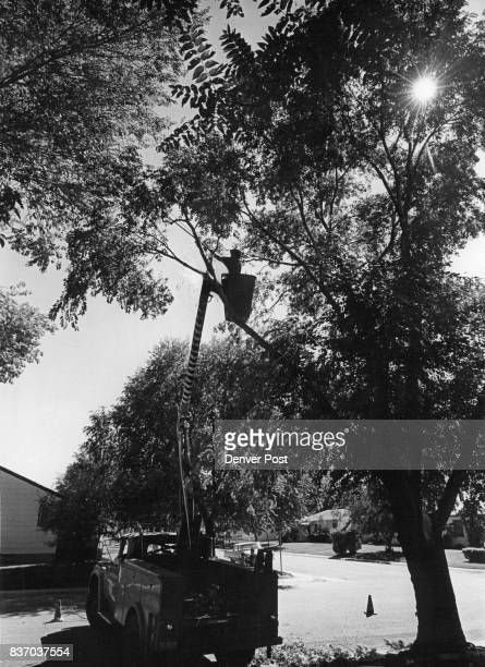 Bill Hawkins 1665 Dallas St stands in the bucket of the Skymaster hydraulic lift used to hold him up in branches of trees Credit Denver Post