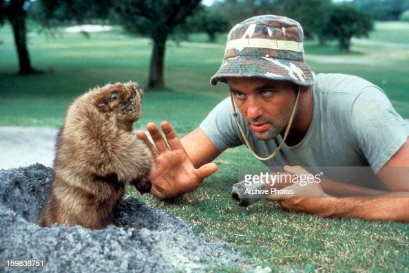 Bill Murray eye to eye with a groundhog in a scene from the film 'Caddyshack' 1980