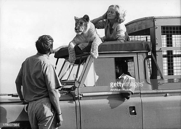 Bill Travers and Virginia McKenna with Elsa the lioness in a scene from the film 'Born Free' 1966