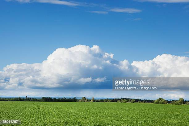 Billows of clouds with blue sky over a field