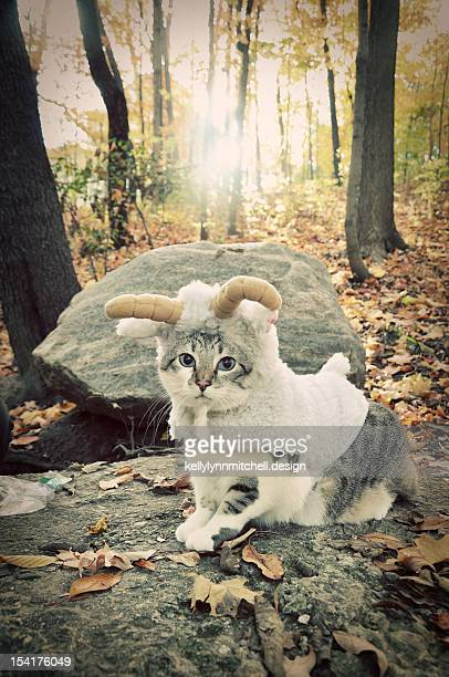Billy Goat Cat Costume on the Mountain
