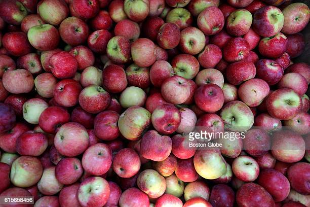 A bin of Paul Red apples at Russell Orchard in Ipswich Mass on Sept 13 2016 The orchard has been dealing with one of the worst droughts since 1930s