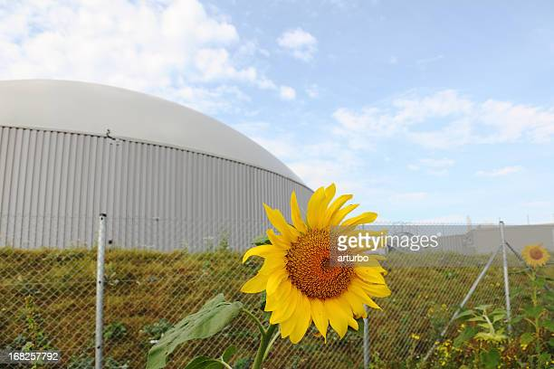 bio gas power plant with two daisy sun flowers