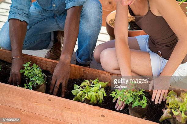 Biodegradable plant pots being placed in planter box