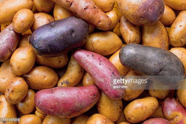 biodiversity - variety of potatoes