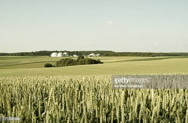 Bioenergie, Biomasse Energie Pflanze in einer ländlichen Landschaft