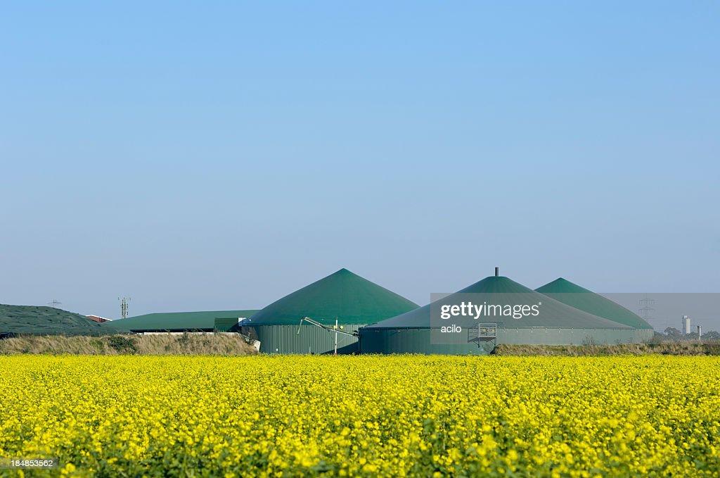 Biogas plant and rape field