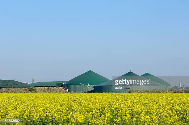 Biogas plant and rape field