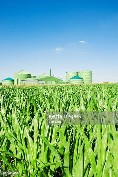 Biogas fahren plant