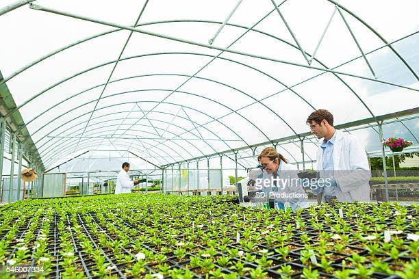 Biologists study in a greenhouse