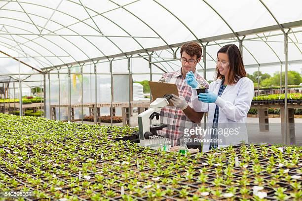 Biologen arbeiten mit Pflanzen