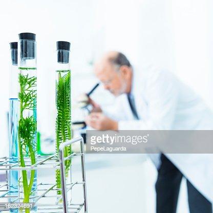 Biology investigation