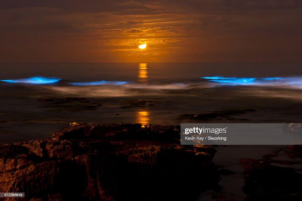 Bioluminescent tide (red tide) at La Jolla Cove