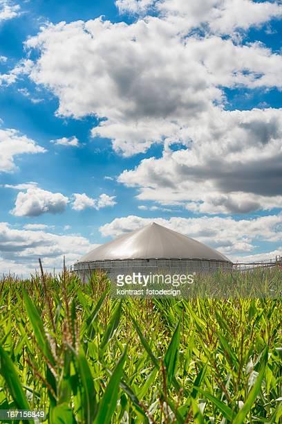 Biomasse Energie Pflanze unter eine große Wolkengebilde Energiewende Biogas fahren