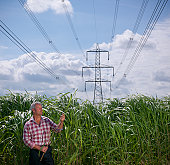 Biomass fuel 'Miscanthus' for burning in power stations