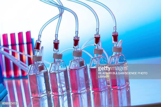 Bioreactors in lab
