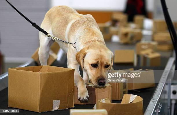 Biosecurity dog Shyann during a demonstration at the graduation of detector dogs at Auckland International Airport on July 20 2012 in Auckland New...