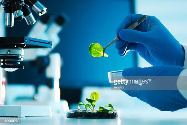La biotechnologie