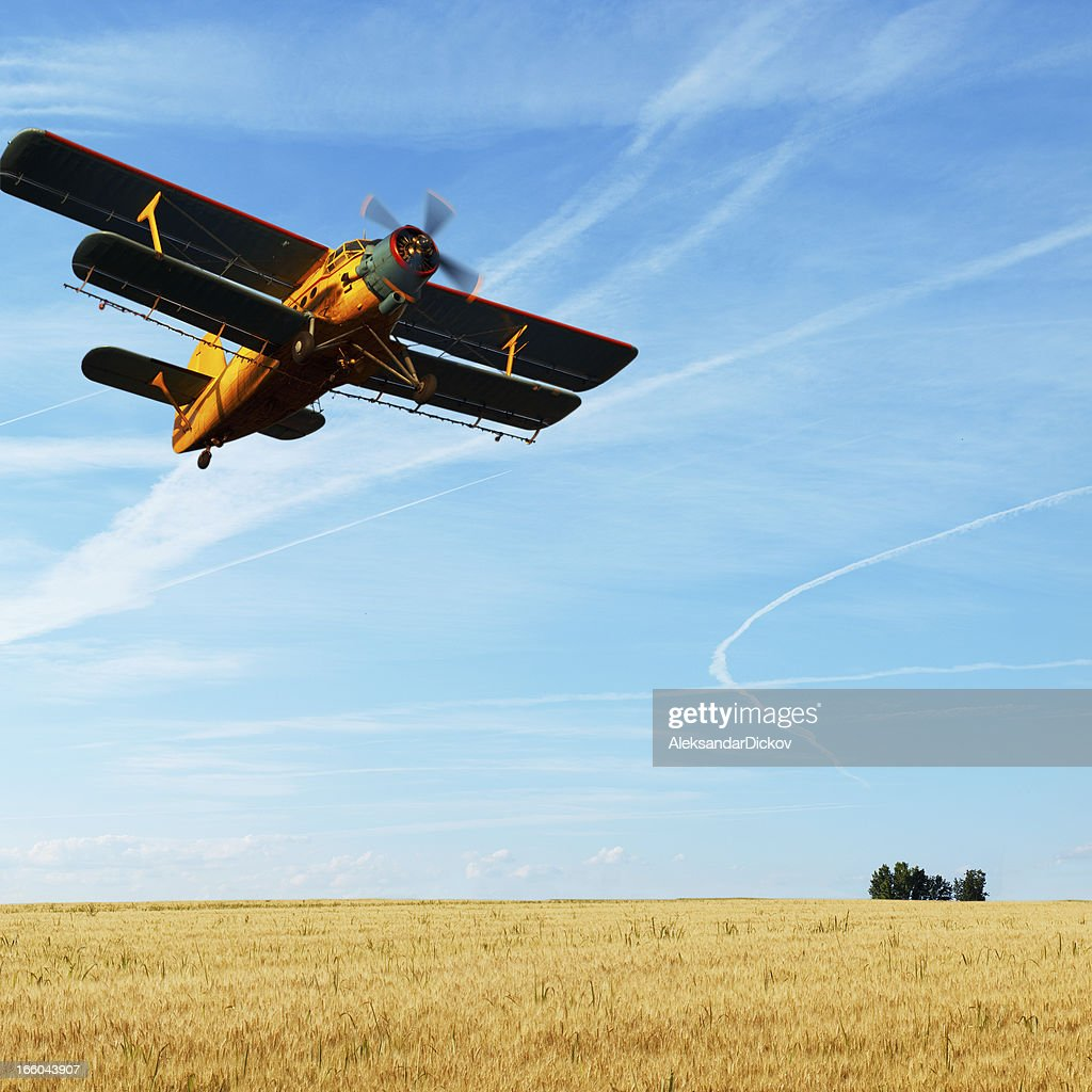 Biplane over the rye