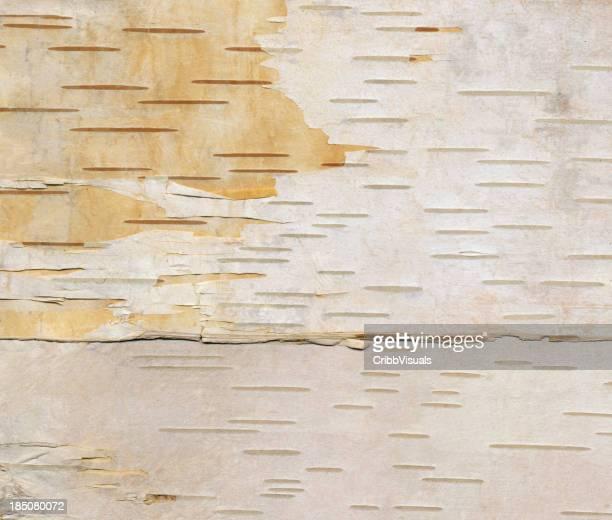 Birch Baumrinde Hintergrund