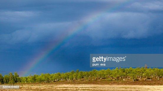 Birch, blue sky and rainbow : Stock Photo