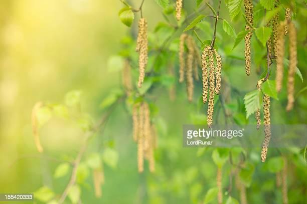 Birch de produits pour le bain bloom