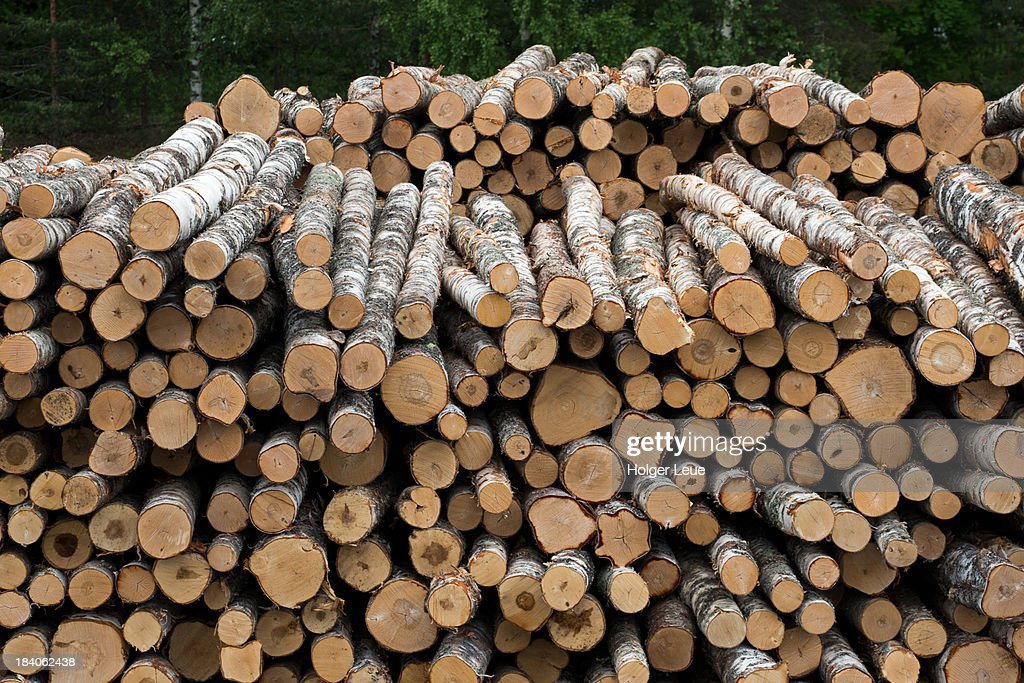 Birch tree logs stacked on freighter : Stock Photo