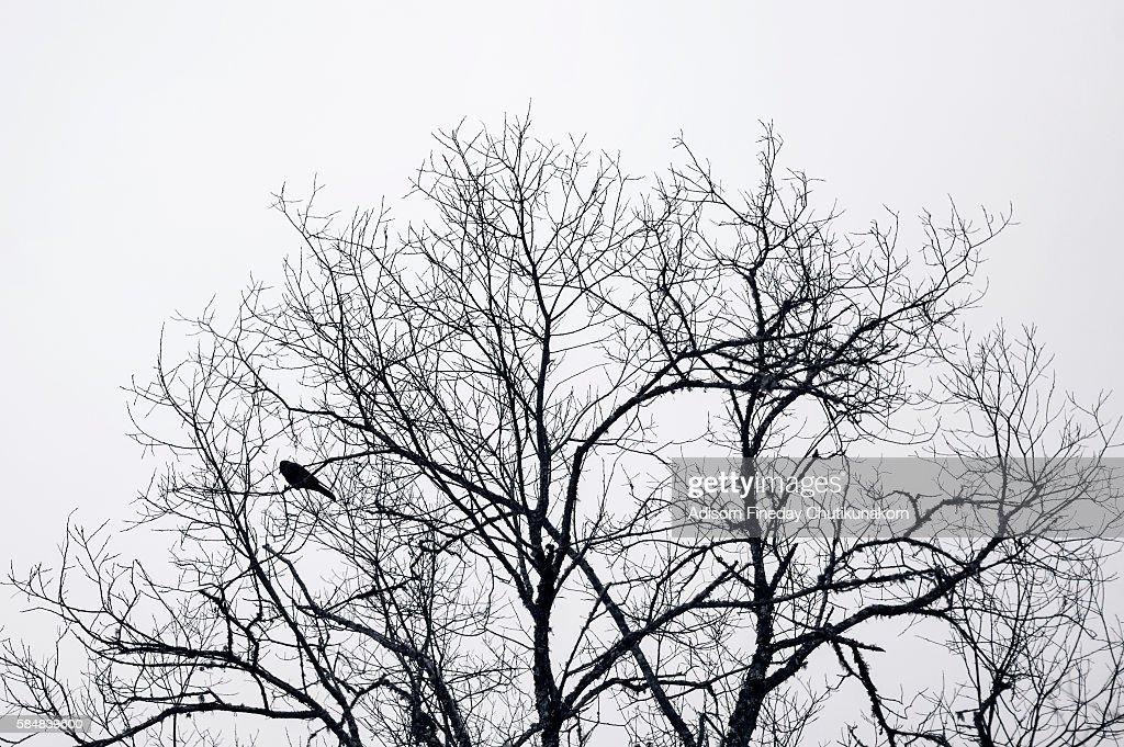 Bird and  dry tree