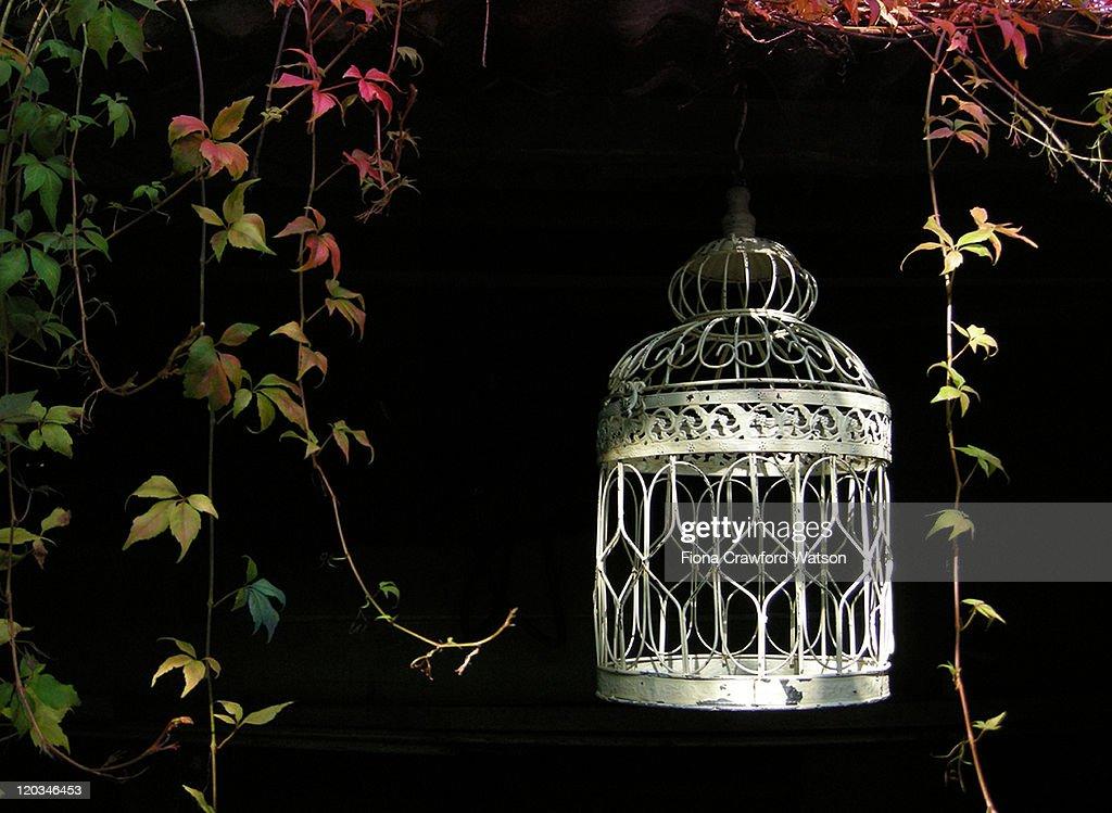 Bird cage hanging in garden