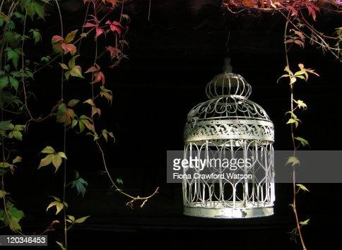 Bird cage hanging in garden : Stock Photo