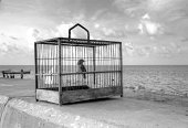 Bird Cage on Seawall