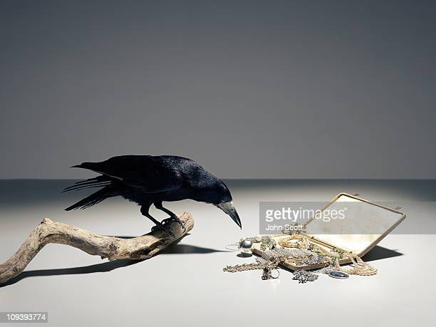 A bird choosing from a pile of jewellery