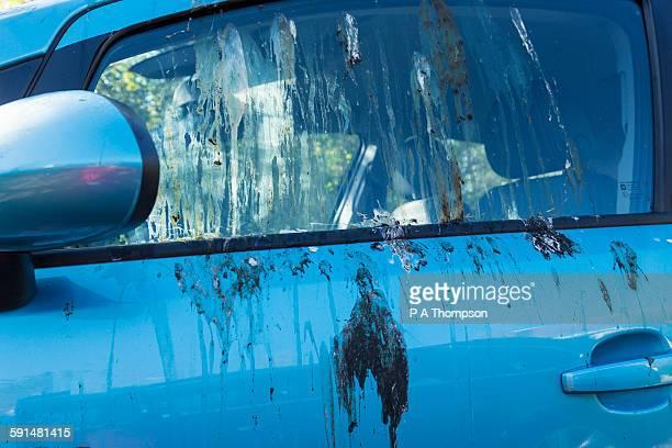 Bird droppings on car windows