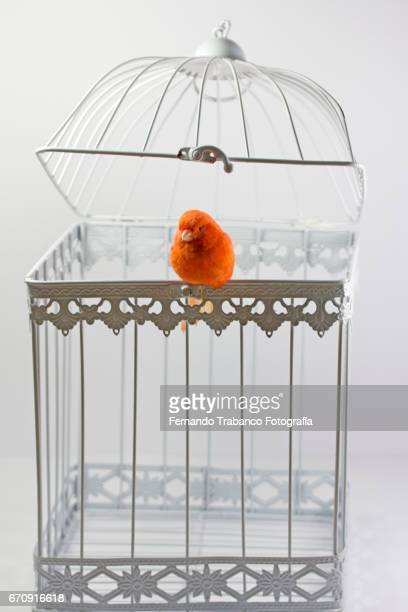 Bird escapes from the cage and is free to fly. Freedom, happiness