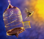 Bird escaping from cage (Digital Composite)