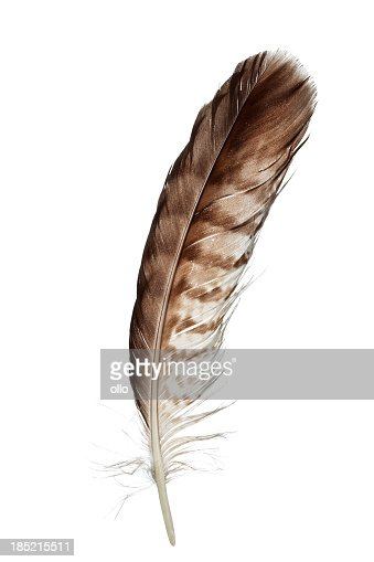 'Bird feather, isolated on white'