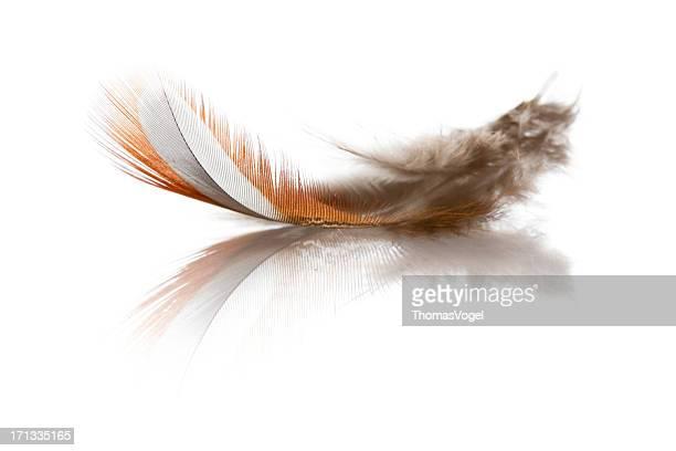 Oiseau en plumes