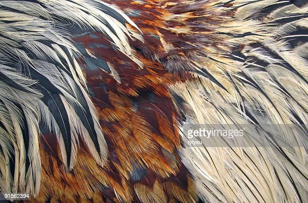 Bird Federn