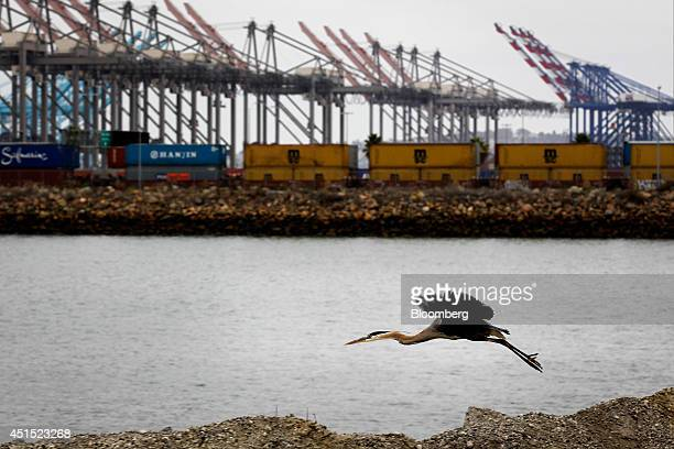 A bird flies as shipping containers stand on rail lines at the Port of Los Angeles in San Pedro California US on Monday June 30 2014 A sixyear labor...
