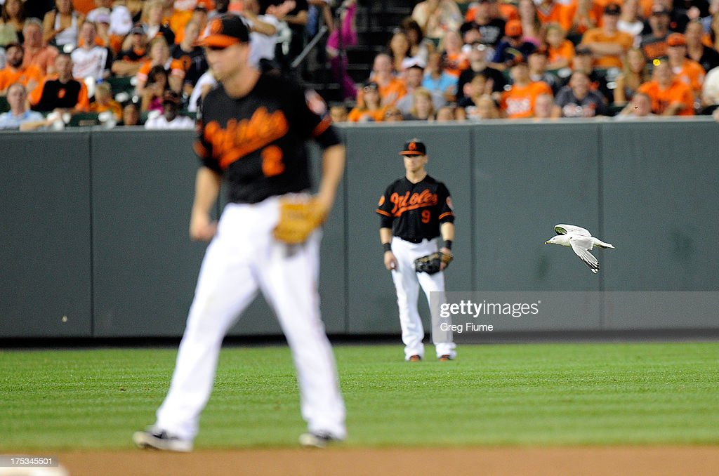 A bird flies between J.J. Hardy #2 and Nate McLouth #9 of the Baltimore Orioles during the eighth inning against the Seattle Mariners at Oriole Park at Camden Yards on August 2, 2013 in Baltimore, Maryland.
