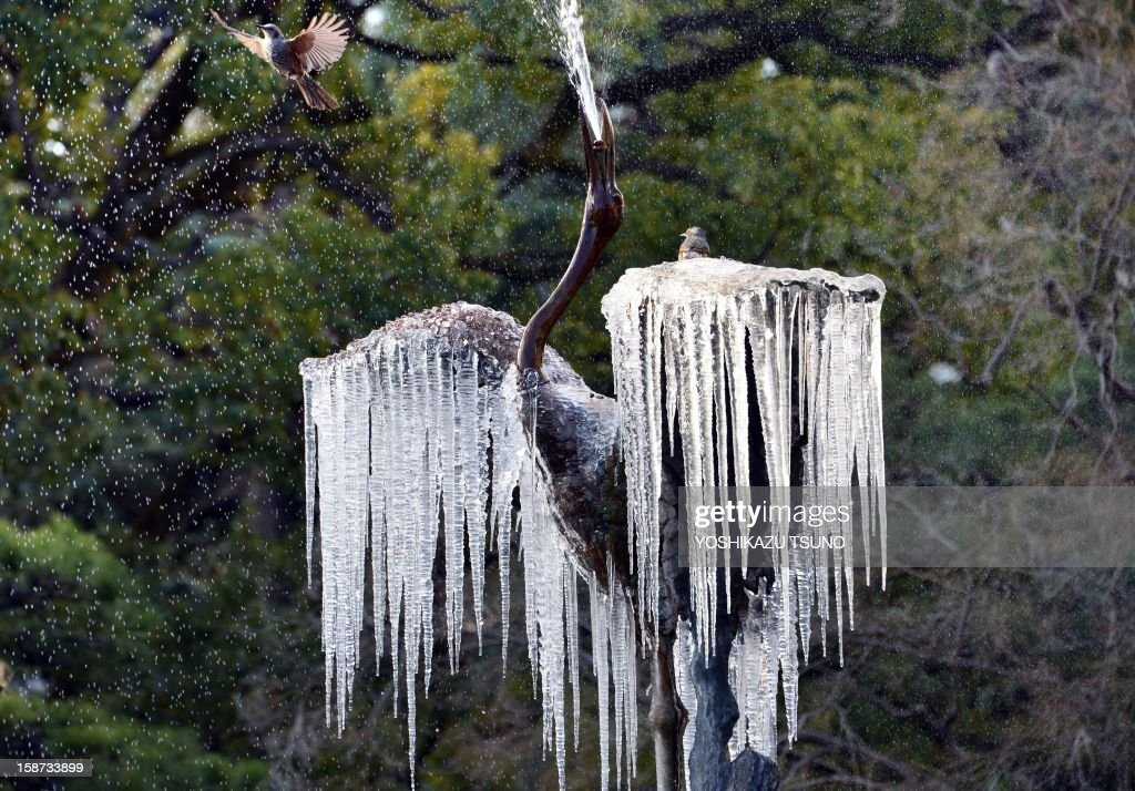 A bird flies over a frozen crane sculpture fountain with icicles hanging from its wings at a Tokyo park on December 27, 2012. A cold atmosphere sent temperatures plummeting to the lowest levels this winter in many parts of Japan. AFP PHOTO / Yoshikazu TSUNO